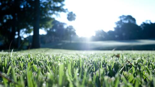 green golf drive course fairway pontevedra putt sawgrass