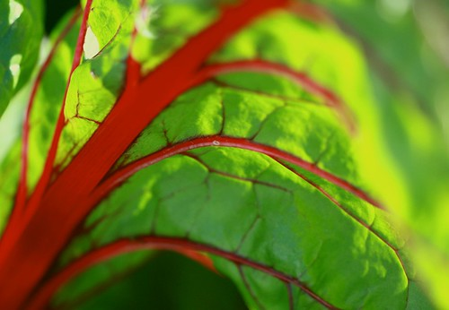 curvaceous chard