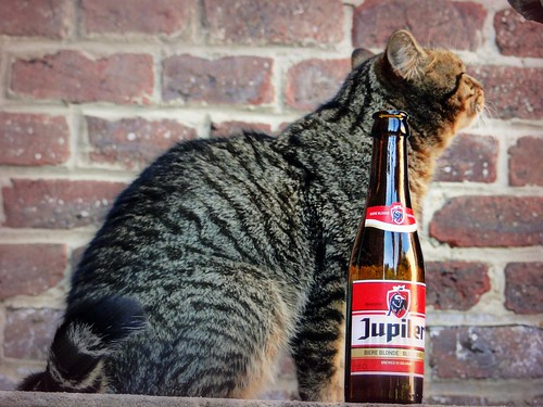Mao and his Jupiler