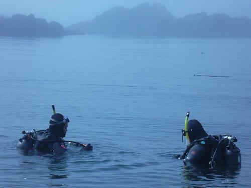 Foggy Blue Morning Dive