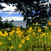 Wildflowers by the Bay  * Happy Birthday Wink* by **Ms Judi**♥