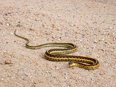 Snake!!