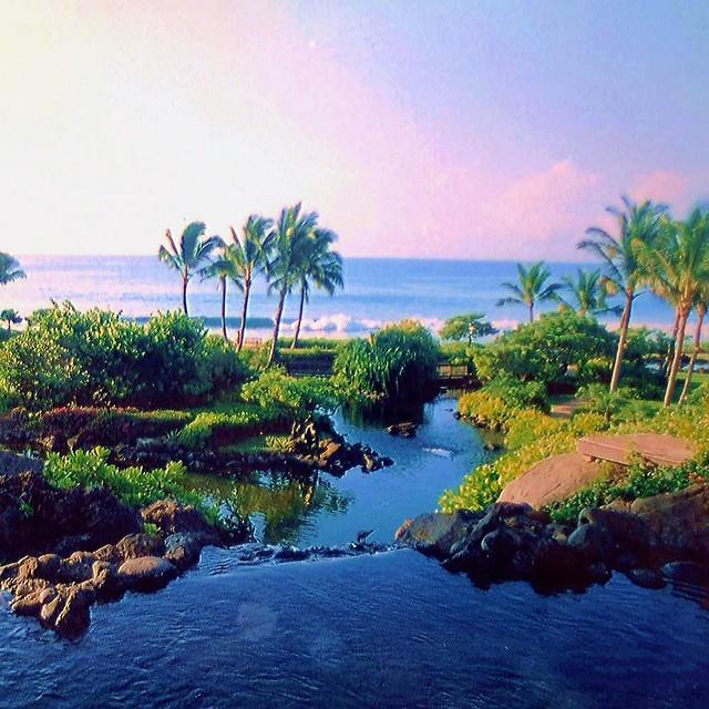 Palmeras cocoteras en Kauai
