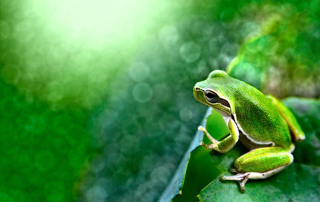 Small frog in a sea of tiny lights - Beautiful Bokeh Photography