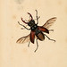The natural history of British insects. v.1.