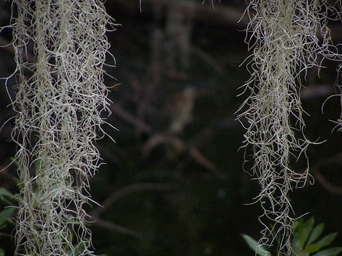 Spanish Moss by Va State Park Staff on Flickr