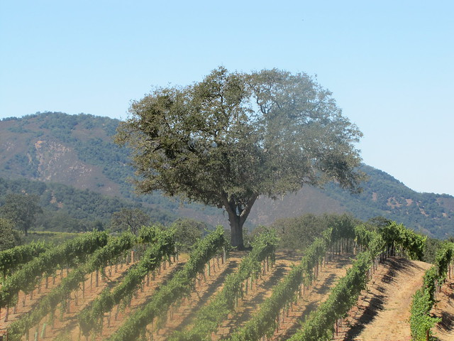Joullian Vineyards in Cachagua