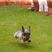 Ears Flying, Dachshund Races - Berlin