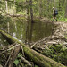 07-06-11: Beaver Dam