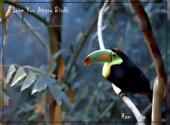 coraciiformes(0.0), animal(1.0), hornbill(1.0), branch(1.0), toucan(1.0), fauna(1.0), beak(1.0), bird(1.0), wildlife(1.0),