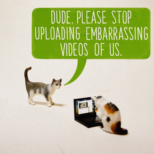 What If Cats Were Using The Internet All Along?
