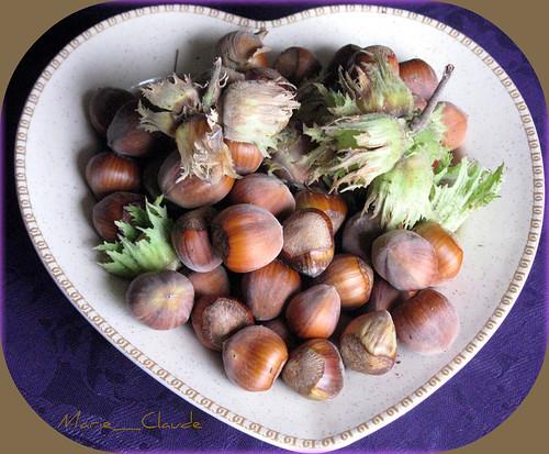nature brittany europe hazelnuts avellanas noisettes nocciole mygearandme