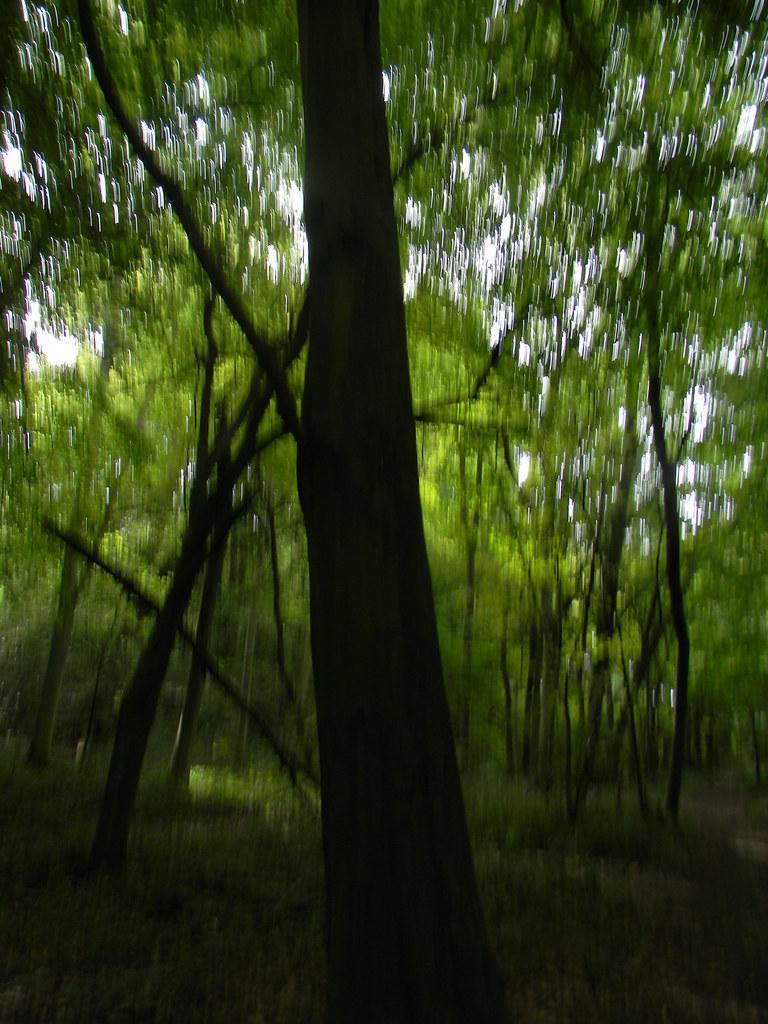 Great Wood Eynsford Circular