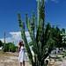 Cactus! por Riccardo Maria Mantero
