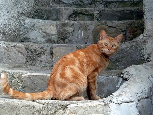 Cat in Trivigno, Italy