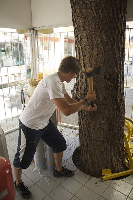 chris dealing with the tree in the store