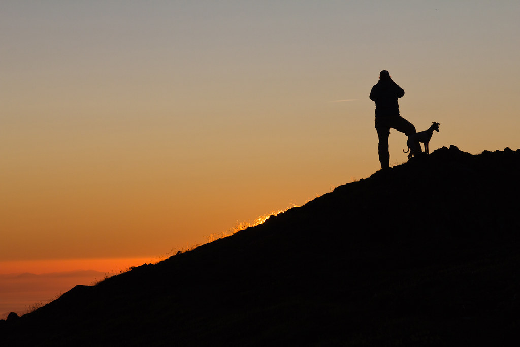 Italian Greyhounds have the cutest silhouettes