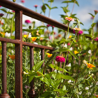 a floral french fence, because it's friday