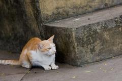 Stray Cat Hunting