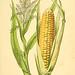 Atlas de poche des plantes des champs, des prairies et des bois