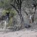 El Burro y Los Perros; cerca de Los Reyes Metzontla (al sur de Zapotitlán), Puebla, Mexico por Lon&Queta