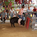 Swine Obstacle Course- 2011