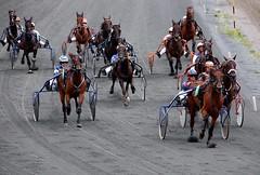 animal sports, racing, equestrian sport, sports, race, pack animal, horse, horse harness, race track, jockey, harness racing,