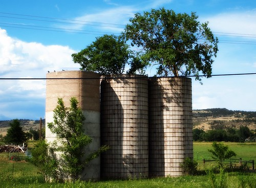 Roadside Tree Silos