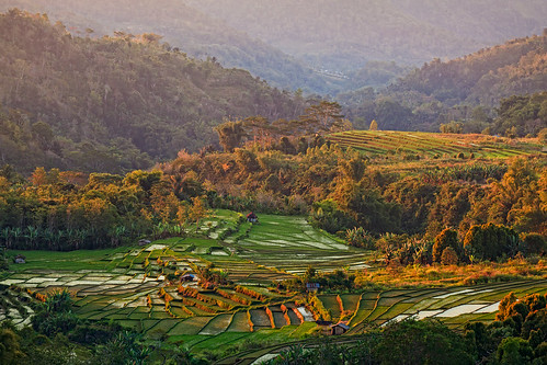 travel flores indonesia landscape photography hometown ricefield robo helminadia manggarai eastnusatenggara