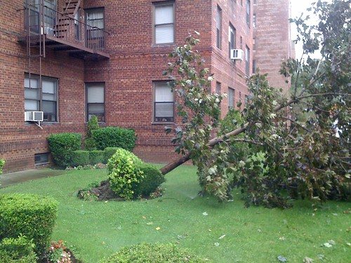 Hurricane Irene - Tree down