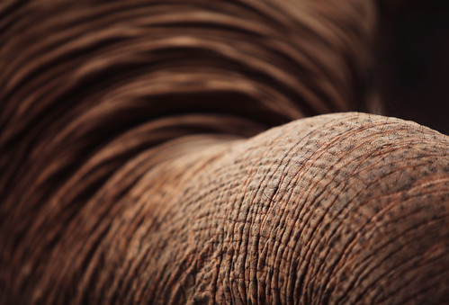 233 [elephant trunk]