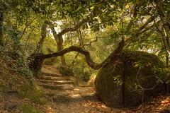 Percurso Botânico