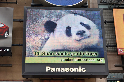 The Video Ad of a Lifetime in Black and White Featuring Tai Shan! :)