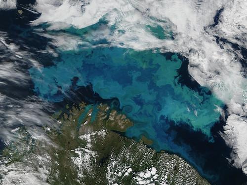 挪威北方海域的浮游植物大量增生現象。包括浮游植物在內,海洋生物正往較冷的水域移動。(攝影:美國航太總署。)