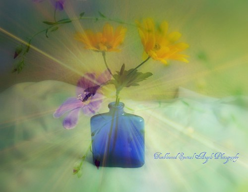 Flowers in a Blue Bottle, Old Blue Bottom