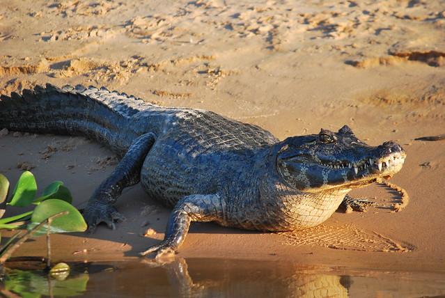 El Gran Pantanal, Mato Grosso, Brasil