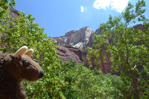 Buddy at Zion National Park, UT