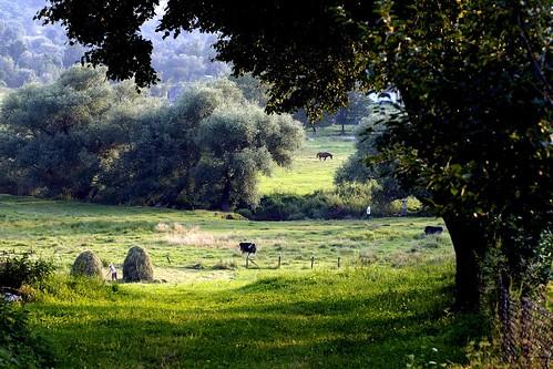 landscape countryside wiese ukraine landschaft pferd soe galizien karpaten flickraward mygearandme dblringexcellence tplringexcellence flickrstruereflection2 flickrstruereflection4