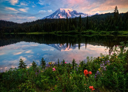 flowers snow color nature water volcano explore mountrainier rainier mountrainiernationalpark pacificnorthwest reflectionlake wildflowers washingtonstate mtrainier hdr summersunrise mountrainiersunrise canonrebelxsi fresnatic sunriseatreflectionlake