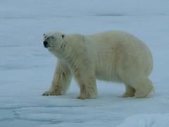 Arctic 2010