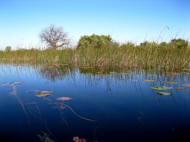 El Delta del Okavango, Botsuana.