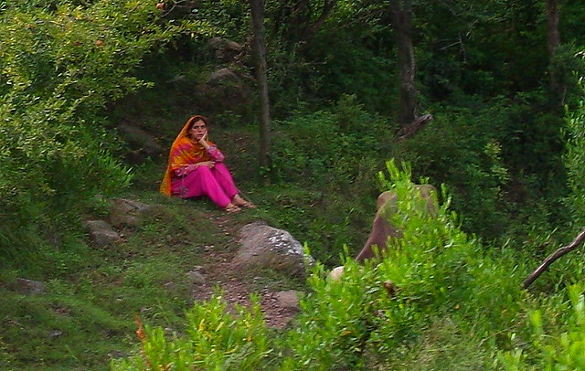 Maiden watching water buffalo, near Danna village, Kashmir