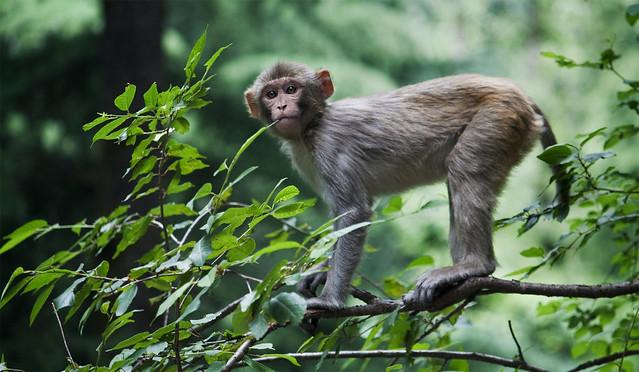 Monkey On A Ducati