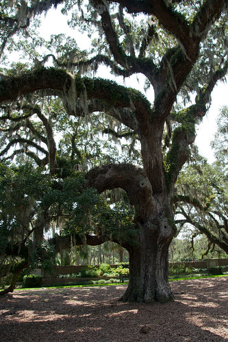 myrtlebeach southcarolina brookgreengardens