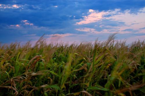 sky nature field corn wind φύση καλαμπόκι ουρανόσ χωράφι άνεμοσ
