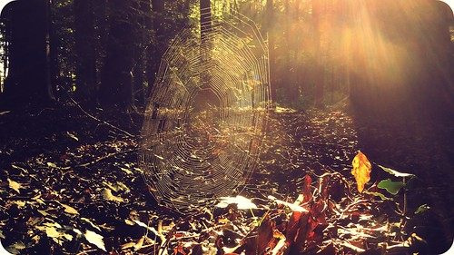 light sun sunlight love forest sunrise switzerland spider shine web spiderweb