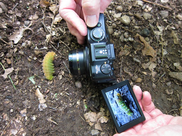 Dave shoots a luna moth