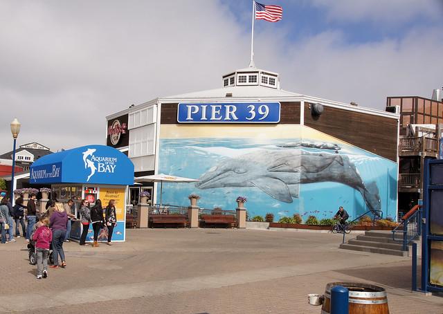 2011 08 14 San Francisco 009 Pier 39 Aquarium Of The Bay