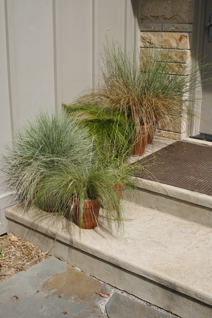 Ornamental grasses in containers at gwa2011 indianapolis for Best ornamental grasses for pots
