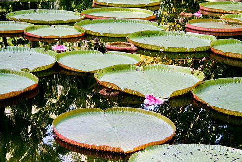photo of lillypads in a body of water